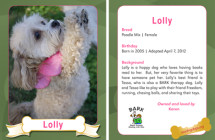 Lolly – Therapy Dog Trading Card