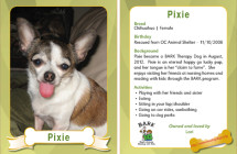 Pixie – Therapy Dog Trading Card