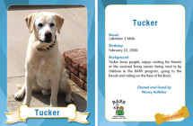 Tucker – Therapy Dog Trading Card
