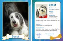 Donut – Therapy Dog Trading Card