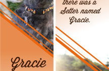 Gracie – Therapy Dog Bookmark