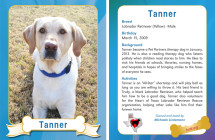 Tanner – Therapy Dog Trading Card