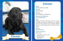 Chester – Therapy Dog Trading Card
