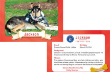 Jackson – Therapy Dog Trading Card