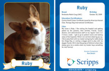 Ruby – Therapy Dog Trading Card